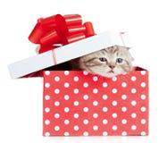 Chat drôle de chéri dans le cadre de cadeau rouge Image libre de droits