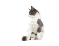 Chat drôle regardant dans l'avant Photographie stock