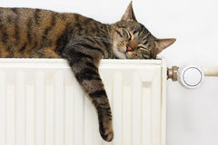 Chat détendant sur un radiateur Images libres de droits