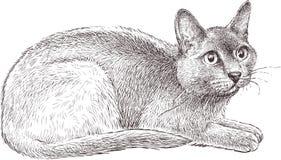 Chat effrayé illustration de vecteur