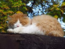 Chat en automne Images stock