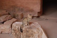 Chat en dehors d'une tombe antique Image stock