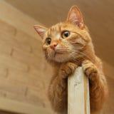 Chat en haut de la porte Photo libre de droits