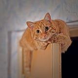 Chat en haut de la porte Image libre de droits