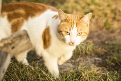 Chat en nature, herbe verte Images stock