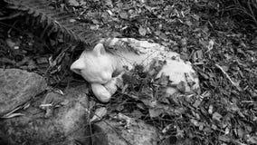 Chat en pierre dormant dans les feuilles tombées en noir et blanc Image libre de droits