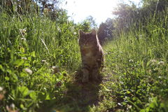 Chat en soleil photo stock