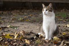 Chat en soleil d'automne Photographie stock