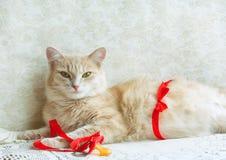 Chat enceinte de gingembre avec le ruban rouge Images libres de droits