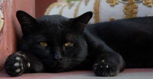 Chat ennuyé Photographie stock libre de droits