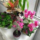 Chat entre les fleurs Photo libre de droits