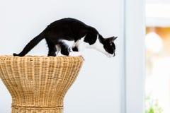 Chat environ à sauter du tabouret en osier images stock
