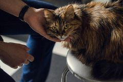 Chat espi?gle de regard images libres de droits