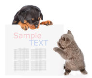 Chat espiègle et chiot de rottweiler jetant un coup d'oeil par derrière le conseil vide Photographie stock