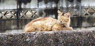 chat essayant de dormir photo stock