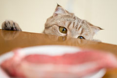 Chat essayant de voler la viande crue de la table de cuisine Images stock