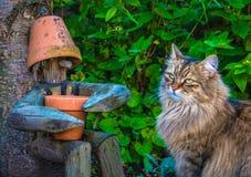 Chat et ami en bois Photos libres de droits