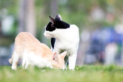 Chat et animaux Photo stock