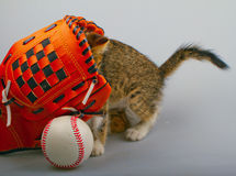 Chat et base-ball Photographie stock