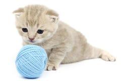 Chat et boule bleue de laine Photos libres de droits