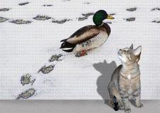 Chat et canard Photos libres de droits