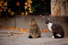 Chat et chat dans la rue Image libre de droits
