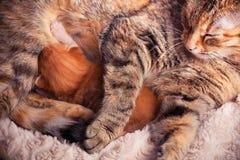 Chat et chaton de mère Photographie stock libre de droits