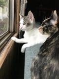 Chat et chaton de maman Photo libre de droits