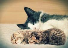 Chat et chatons Photo libre de droits