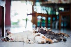 Chat et chatons de mère Photographie stock libre de droits