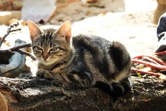 Chat et chien Photos stock