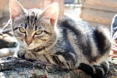 Chat et chien Image libre de droits