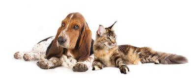 Chat et chien Photo libre de droits