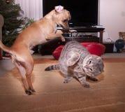 Chat et chien Image stock