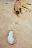 Chat et chien Photo stock