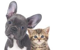 Chat et chien photos libres de droits