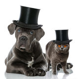 Chat et chien Photo stock