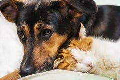 Chat et chien Photographie stock