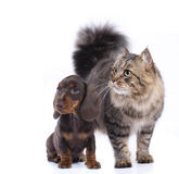 Chat et chien, Photo libre de droits
