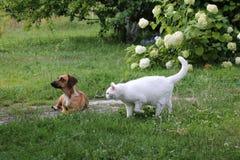 Chat et chien Images stock