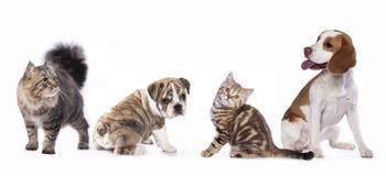 Chat et chien Images libres de droits