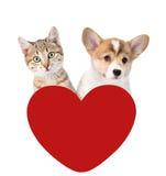 Chat et chien au-dessus de coeur rouge D'isolement sur le fond blanc Photo libre de droits