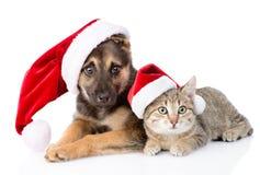 Chat et chien avec le chapeau de Santa Claus D'isolement sur le fond blanc Photos stock