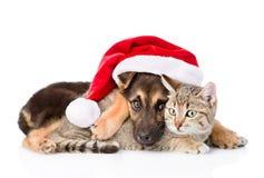 Chat et chien avec le chapeau de Santa Claus D'isolement sur le fond blanc Photo stock