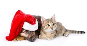 Chat et chien avec le chapeau de Santa Claus D'isolement sur le fond blanc Photographie stock