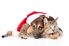 Chat et chien avec le chapeau de Santa Claus D'isolement sur le fond blanc Images libres de droits