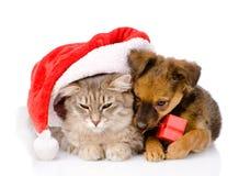 Chat et chien avec le chapeau de Santa et la boîte rouge D'isolement sur le backgr blanc Photo stock