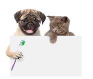 Chat et chien avec une brosse à dents jetant un coup d'oeil par derrière le conseil vide I photo stock