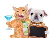 Chat et chien détendant à l'arrière-plan blanc Photos libres de droits
