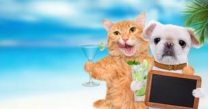 Chat et chien détendant à l'arrière-plan de mer Photo libre de droits